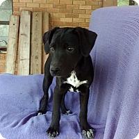 Adopt A Pet :: Lindsey meet me 4/21 - Manchester, CT