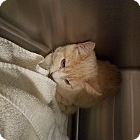 Adopt A Pet :: Lucy - Indianapolis, IN