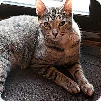 Adopt A Pet :: Taffy - Toronto, ON