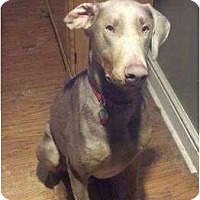 Adopt A Pet :: Otto--adopted!! - New Richmond, OH