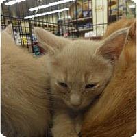 Adopt A Pet :: Gordon - Warren, MI
