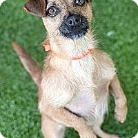 Adopt A Pet :: Nora - Mission Viejo, CA