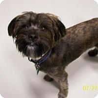 Adopt A Pet :: Teddy - Brewster, NY