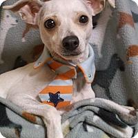 Adopt A Pet :: Huey - Foster, RI