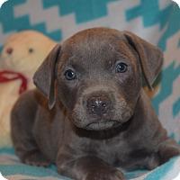 Adopt A Pet :: TYLER - Nashville, TN