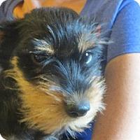 Adopt A Pet :: Brody - Greenville, RI