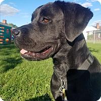Adopt A Pet :: RIVER - New Windsor, NY