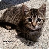 Adopt A Pet :: Gillespie - Portland, OR