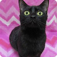 Adopt A Pet :: LYDIA - Lexington, NC