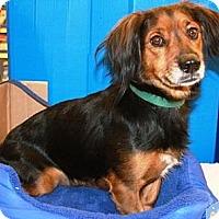 Adopt A Pet :: Nickers - Gilbert, AZ