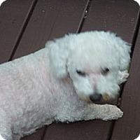 Adopt A Pet :: Mia - Raleigh, NC