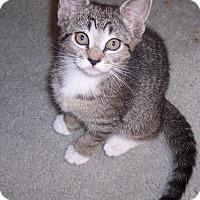 Adopt A Pet :: Cobie - Richmond, VA