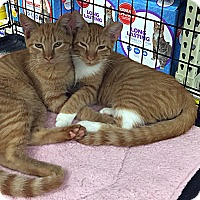 Adopt A Pet :: Flame - College Station, TX
