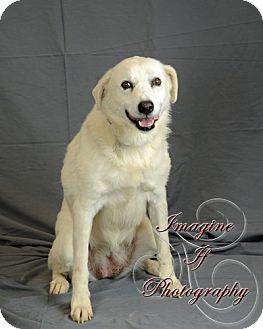 Labrador Retriever Mix Dog for adoption in Newcastle, Oklahoma - Elsa