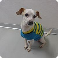 Adopt A Pet :: Wishbone - Manning, SC