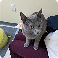 Adopt A Pet :: Muimui - Pasadena, CA