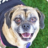 Adopt A Pet :: *Boka Kibble - Pittsburg, CA