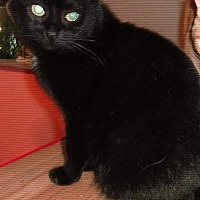 Adopt A Pet :: robyn - brewerton, NY