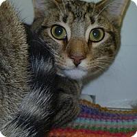 Adopt A Pet :: Donner - Hamburg, NY