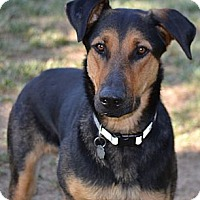 Adopt A Pet :: Thunder - Simi Valley, CA