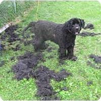 Adopt A Pet :: Dugan - Racine, WI