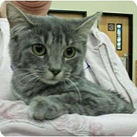 Adopt A Pet :: Jelly Bean - Reston, VA