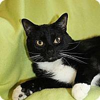 Adopt A Pet :: Runty - Richland, MI