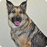 Adopt A Pet :: Gretchen - Port Washington, NY
