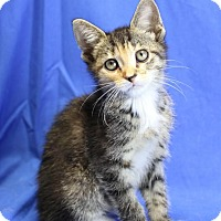 Adopt A Pet :: Hestia - Winston-Salem, NC