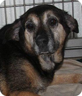 Shepherd (Unknown Type) Mix Dog for adoption in Savannah, Missouri - Marlene