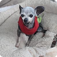 Adopt A Pet :: Chili Pepper - Creston, CA