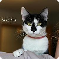 Adopt A Pet :: Glimmer - Edwardsville, IL
