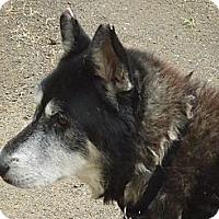 Adopt A Pet :: Louie - Ashland, OR