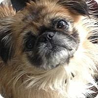 Adopt A Pet :: Courtney Sue - Hazard, KY