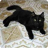Adopt A Pet :: Fuzzy - Toronto, ON