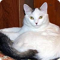 Adopt A Pet :: Plum - Alexandria, VA