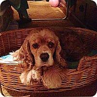 Adopt A Pet :: MOLLY - Tacoma, WA