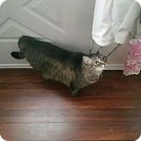 Adopt A Pet :: Tigger - Troy, OH