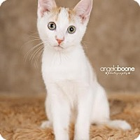 Adopt A Pet :: Maxwell - Plymouth, MN