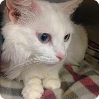 Adopt A Pet :: Little Miss - Newport Beach, CA