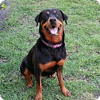 Adopt A Pet :: Sofia - Seffner, FL