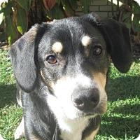 Adopt A Pet :: Blake - LaGrange, KY