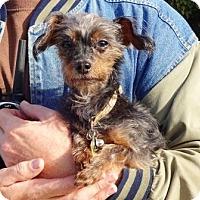 Adopt A Pet :: Swayze - Lathrop, CA