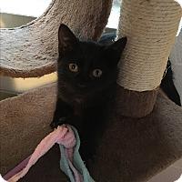 Adopt A Pet :: Nitro - Butner, NC