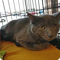 Adopt A Pet :: Chance - Avon, OH