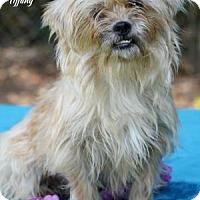 Adopt A Pet :: TIFFANY - Tomball, TX