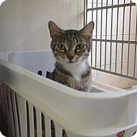Adopt A Pet :: Momma - Winter Haven, FL