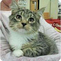 Adopt A Pet :: Champ - Reston, VA