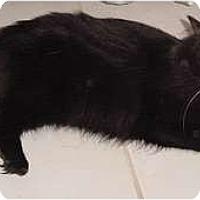 Adopt A Pet :: Sebastian - Franklin, NC