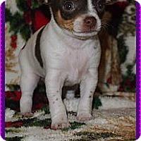 Adopt A Pet :: Elena - Plano, TX